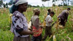 Kiralık topraklarda tarım yapmak
