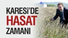 KARESİ'DE HASAT ZAMANI