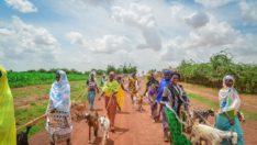 AFRİKA'DAKİ YOKSULLARA SÜT KEÇİSİ DAĞITIYORLAR