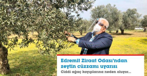EDREMİT ZİRAAT ODASI'NDAN ZEYTİN CÜZZAMI UYARISI